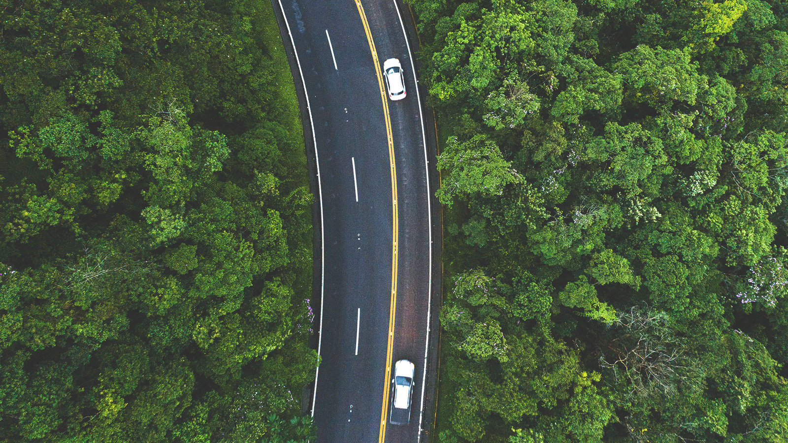 cars driving on forest lined roads